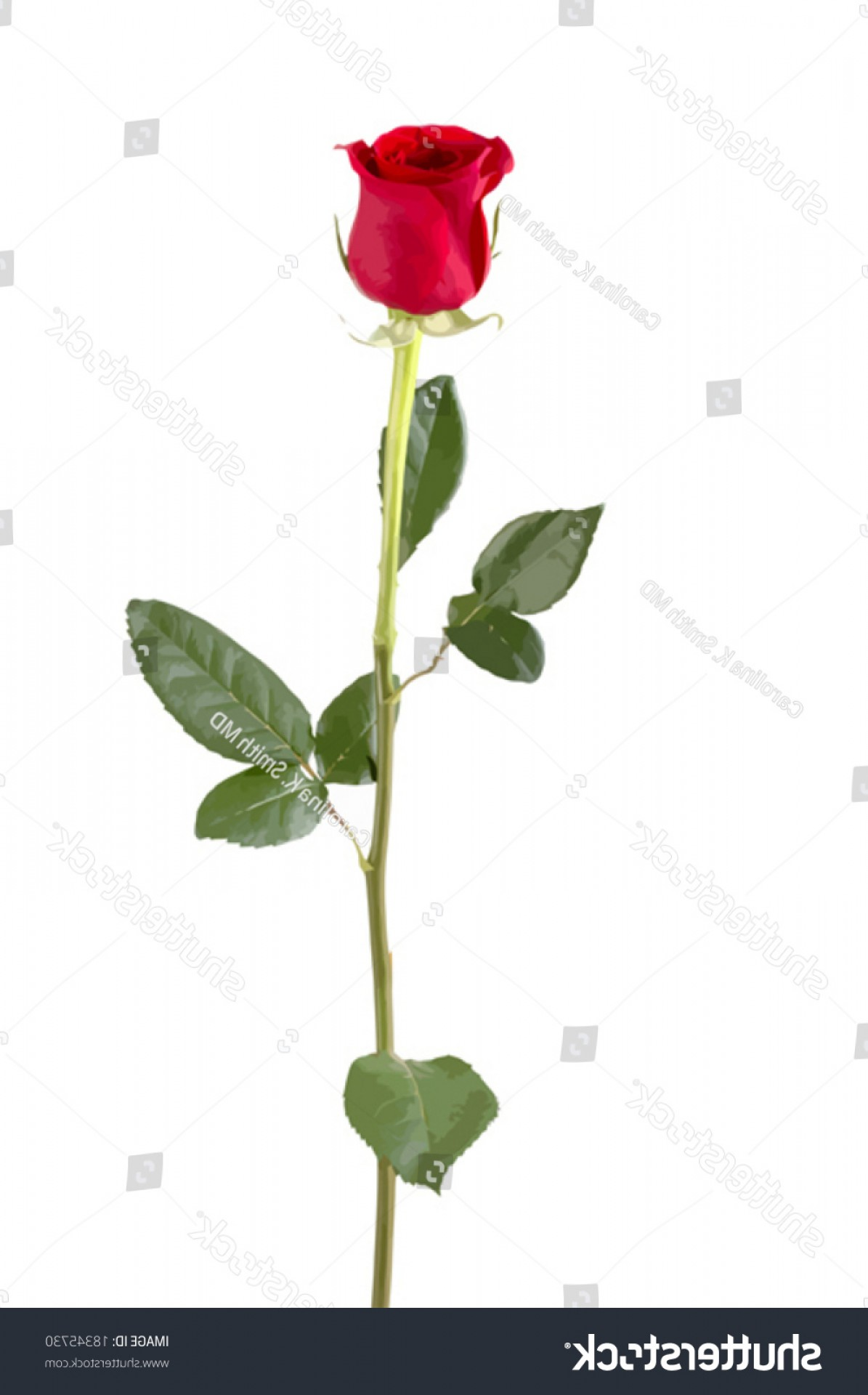 Bud Vector: Isolated Long Stem Red Rose Bud