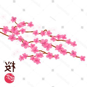 Cherry Blossoms Vector Shutterstock: Japanese Cherry Blossom Vector Illustration Includes
