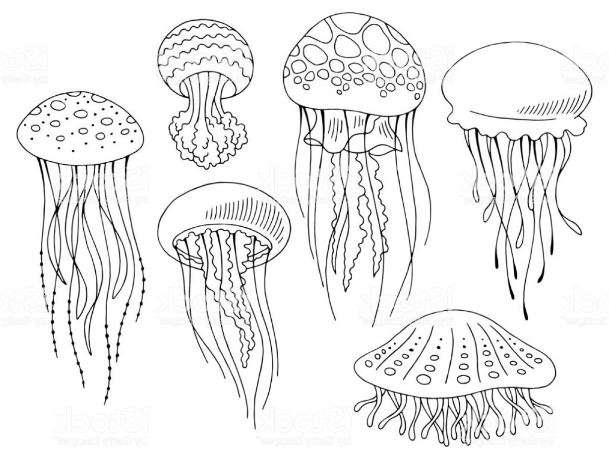 Jelly Fish Graphic Vector: Jellyfish Graphic Set Black White Isolated Sketch Illustration Vector Gm