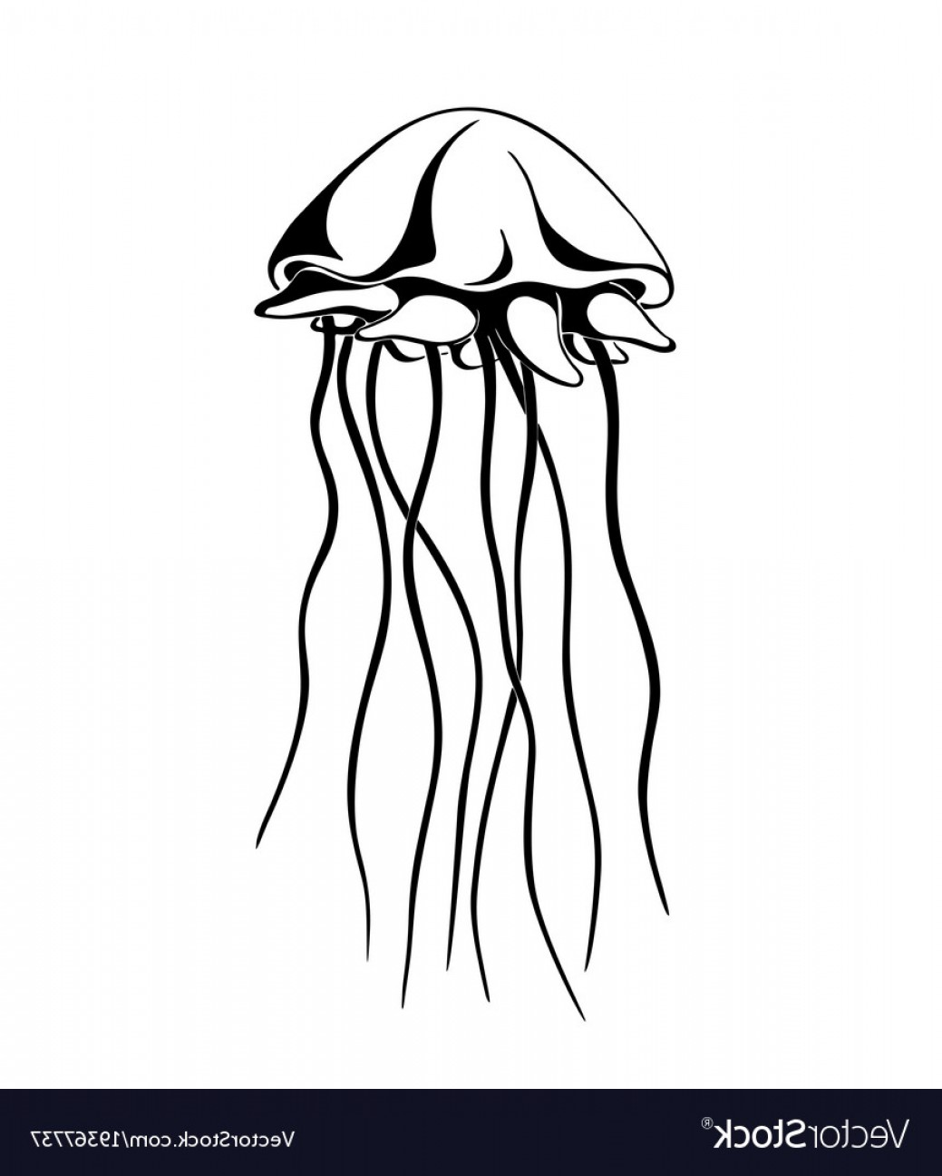 Jelly Fish Graphic Vector: Jellyfish Ink Hand Drawn Vector