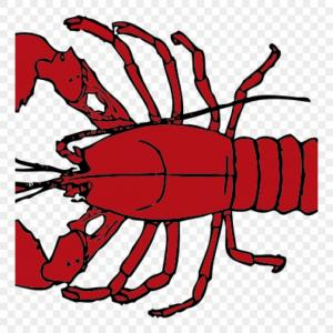 Lobster Clip Art Vector: Jojrbolobster Outline Clip Art At Clker Vector Online