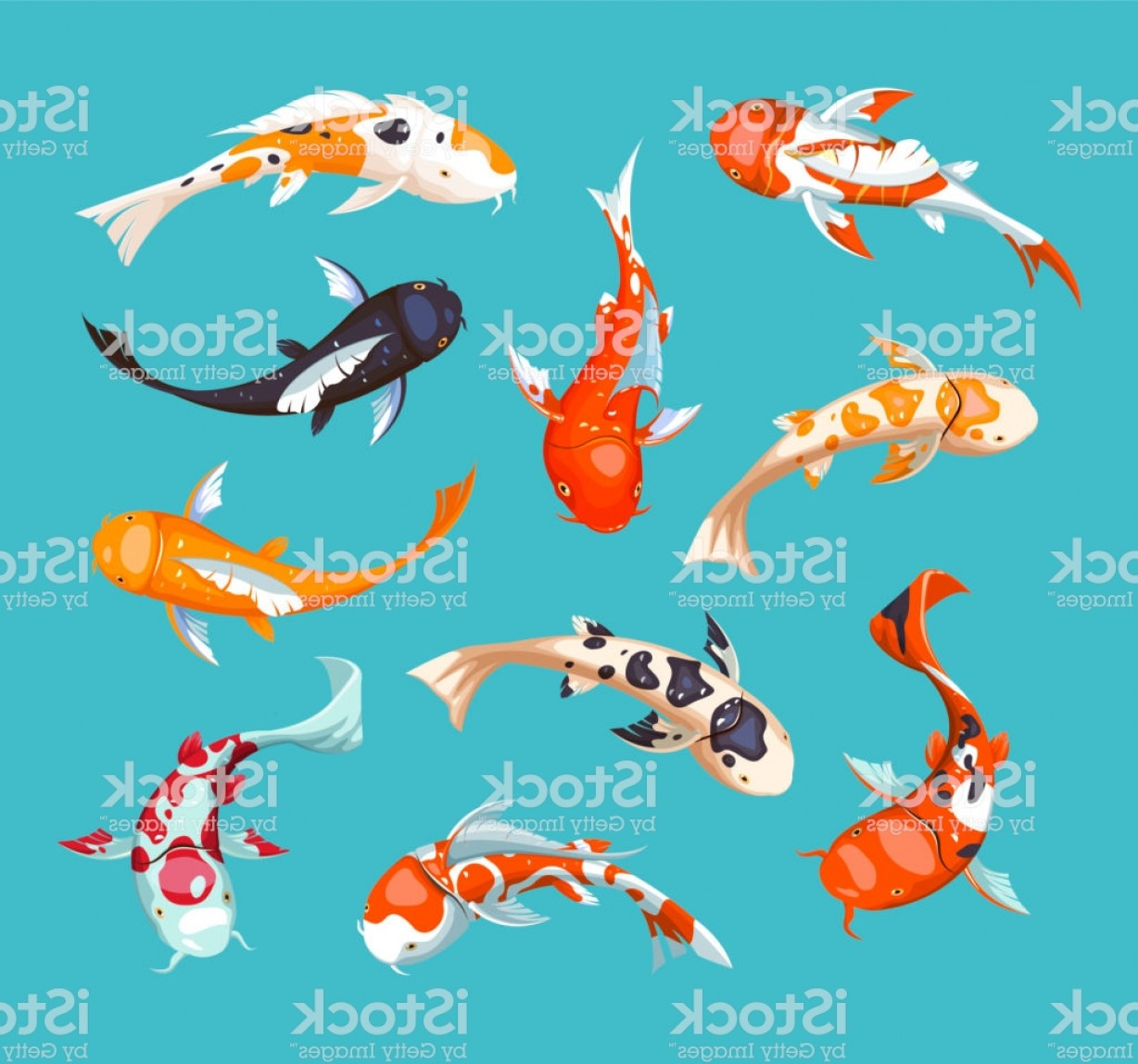 Koi Vector: Koi Carps Koi Japanese Fish Vector Illustration Chinese Goldfish Koi Symbol Of Gm