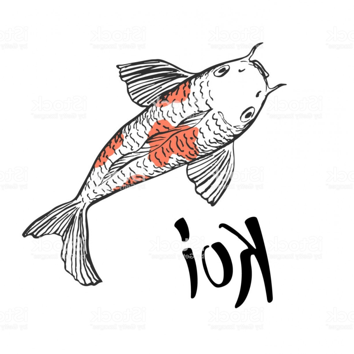 Koi Vector: Koi Fish Illustration With Hand Written Calligraphic Word Koi Gm