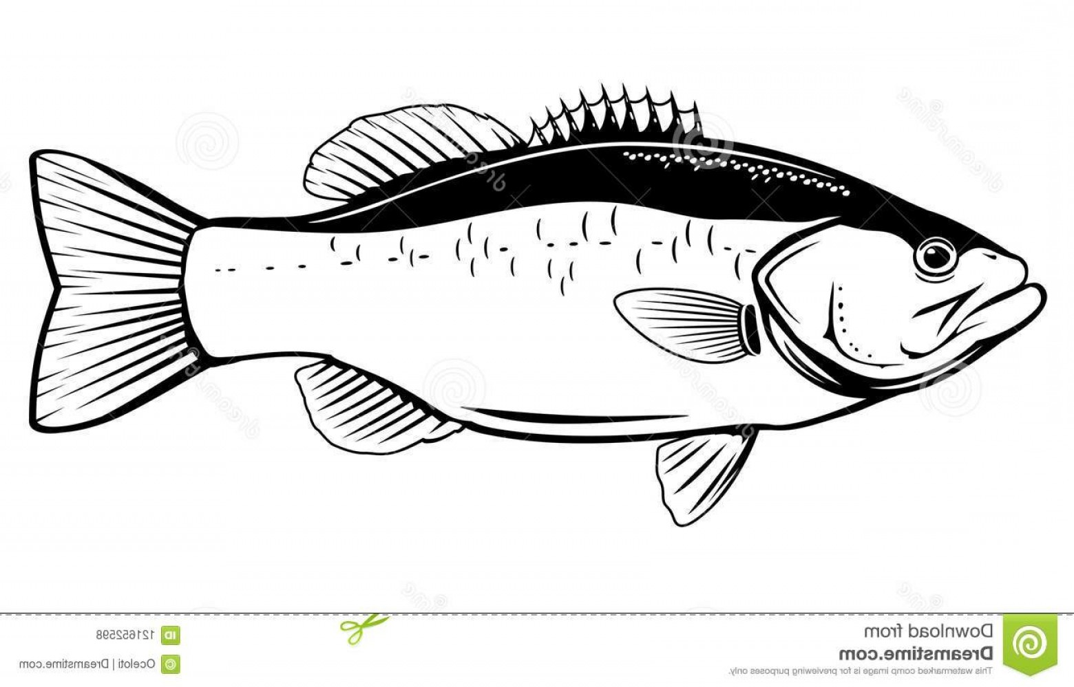 Largemouth Bass Silhouette Vector: Largemouth Bass Fish Side View Black White Color Isolated Largemouth Bass Fish Image