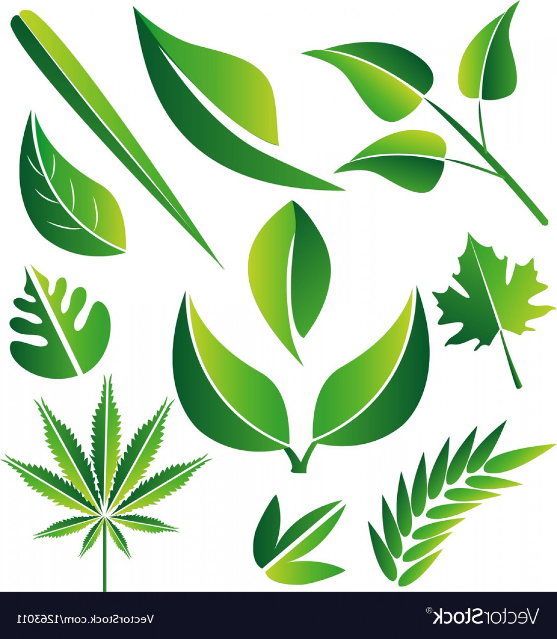 Vector Leaf Graphicd: Leaf Icon Graphic Set Vector