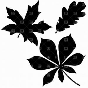Oak Tree Vector Free: Leaf Vector Free Inspirational Oak Chestnut And Maple Leaf Vector Image Vector Artwork Of Plants