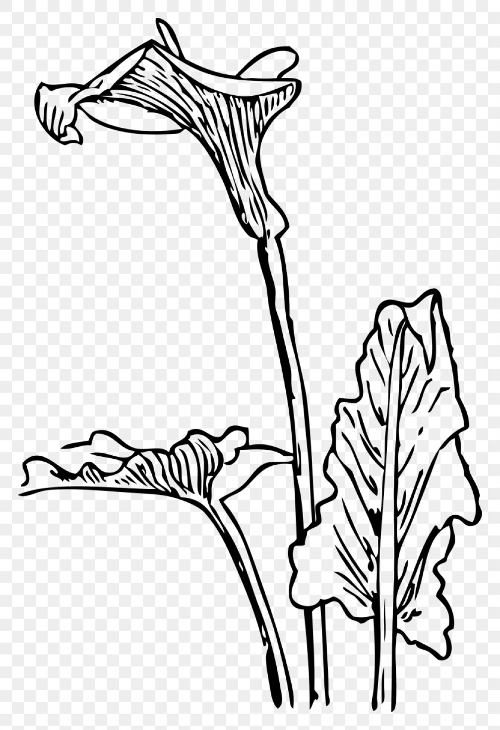 Lily Vector Art: Lilly Clip Art Free Vector Free Clipart Easter Lily