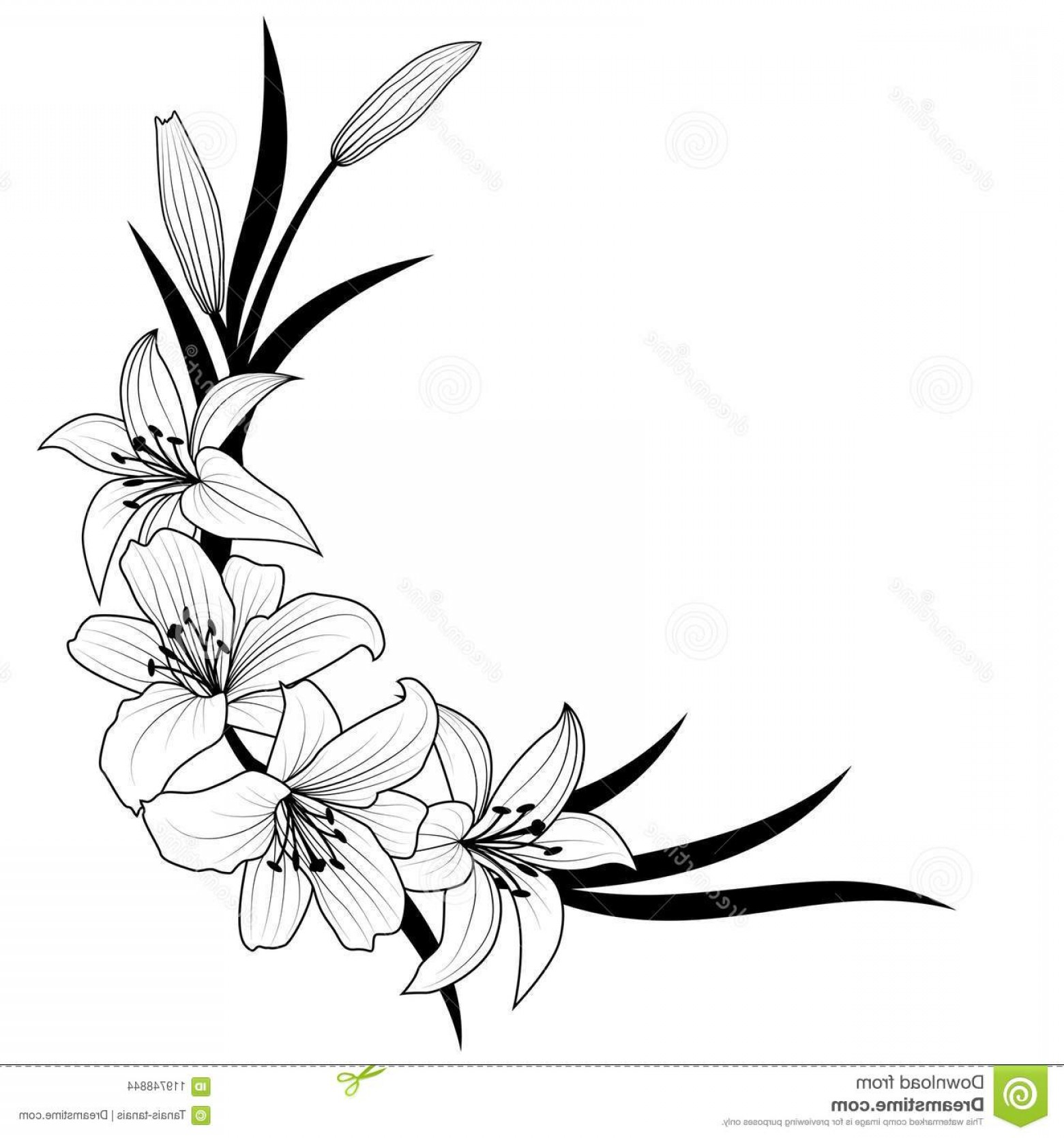 Lily Vector Art: Lily Flower Vector Illustration Black White Colors Image