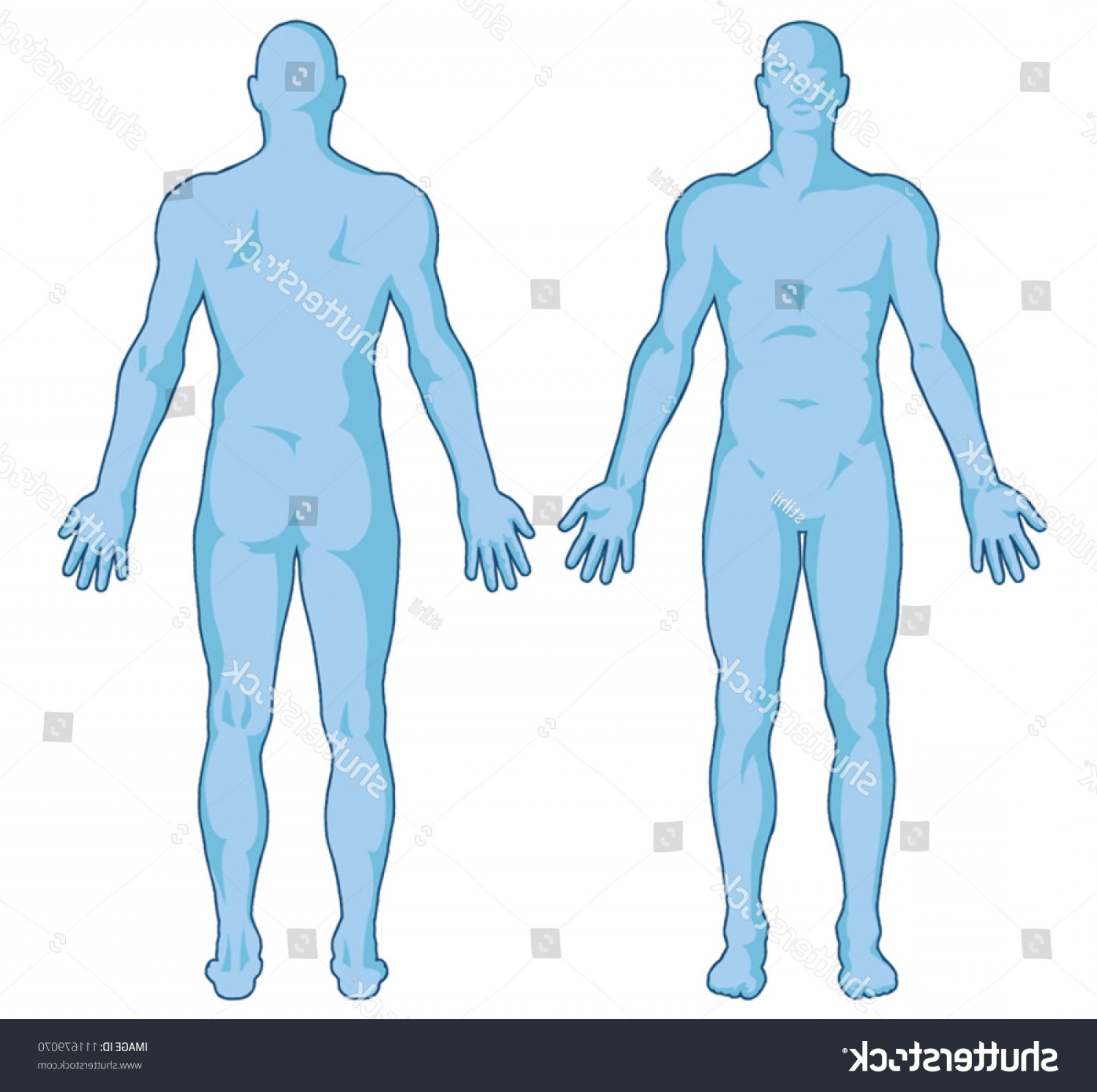 Male Human Vector: Male Body Shapes Human Outline Vector