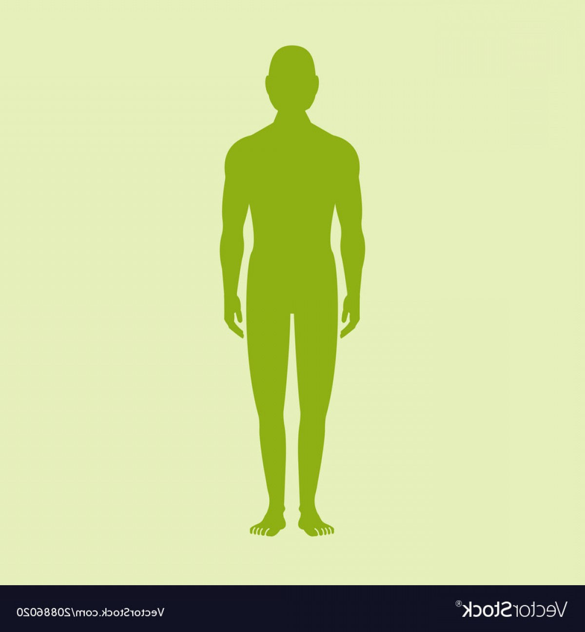 Male Human Vector: Male Human Body Silhouette With Shadow Vector