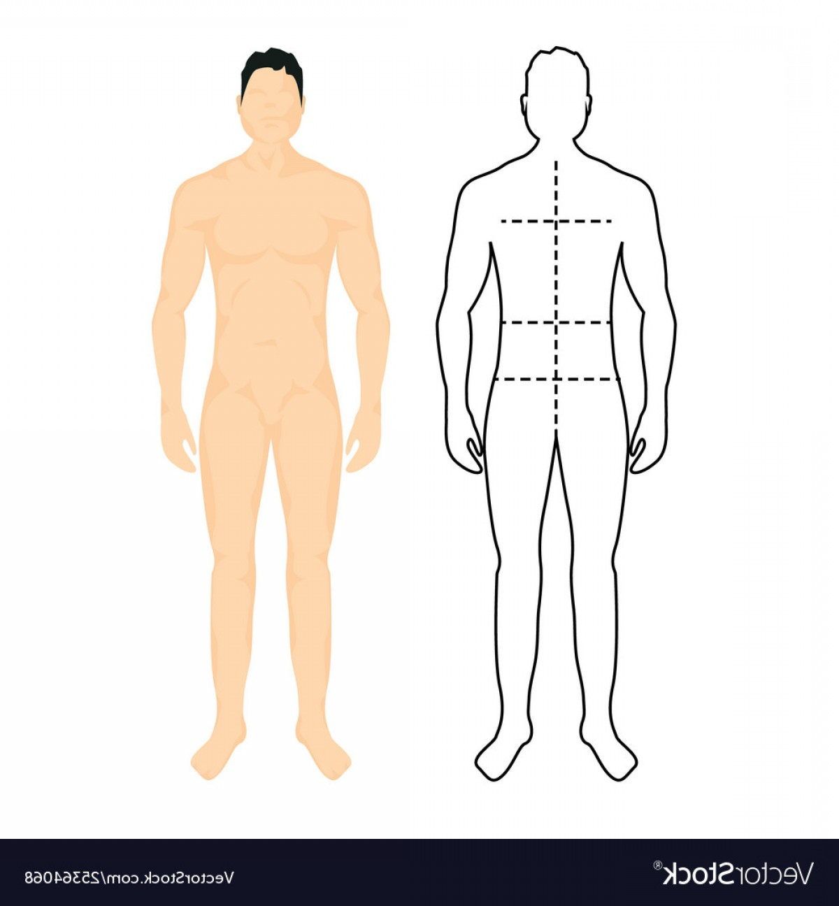 Human Body Outline Vector: Man Anatomy Silhouette Size Human Body Full Vector