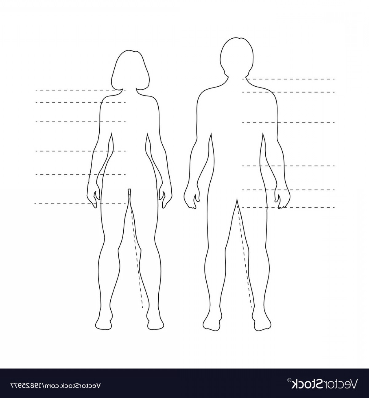 Human Body Outline Vector: Man And Woman Human Body Silhouettes Vector