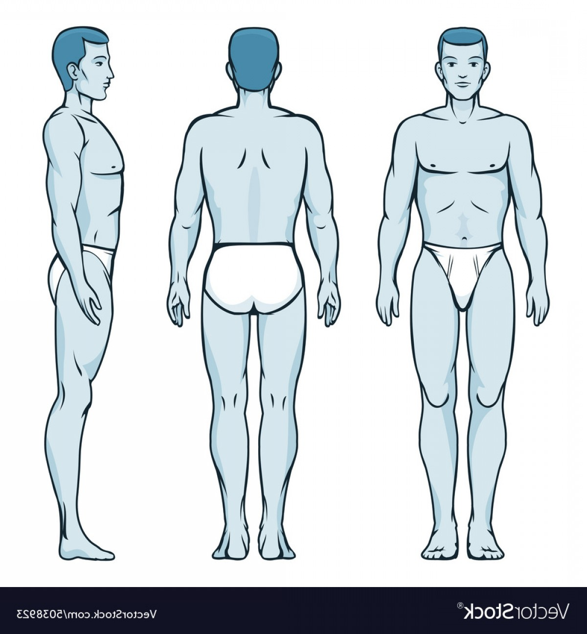 Male Human Vector: Man Body Model Front Back And Side Human Poses Vector