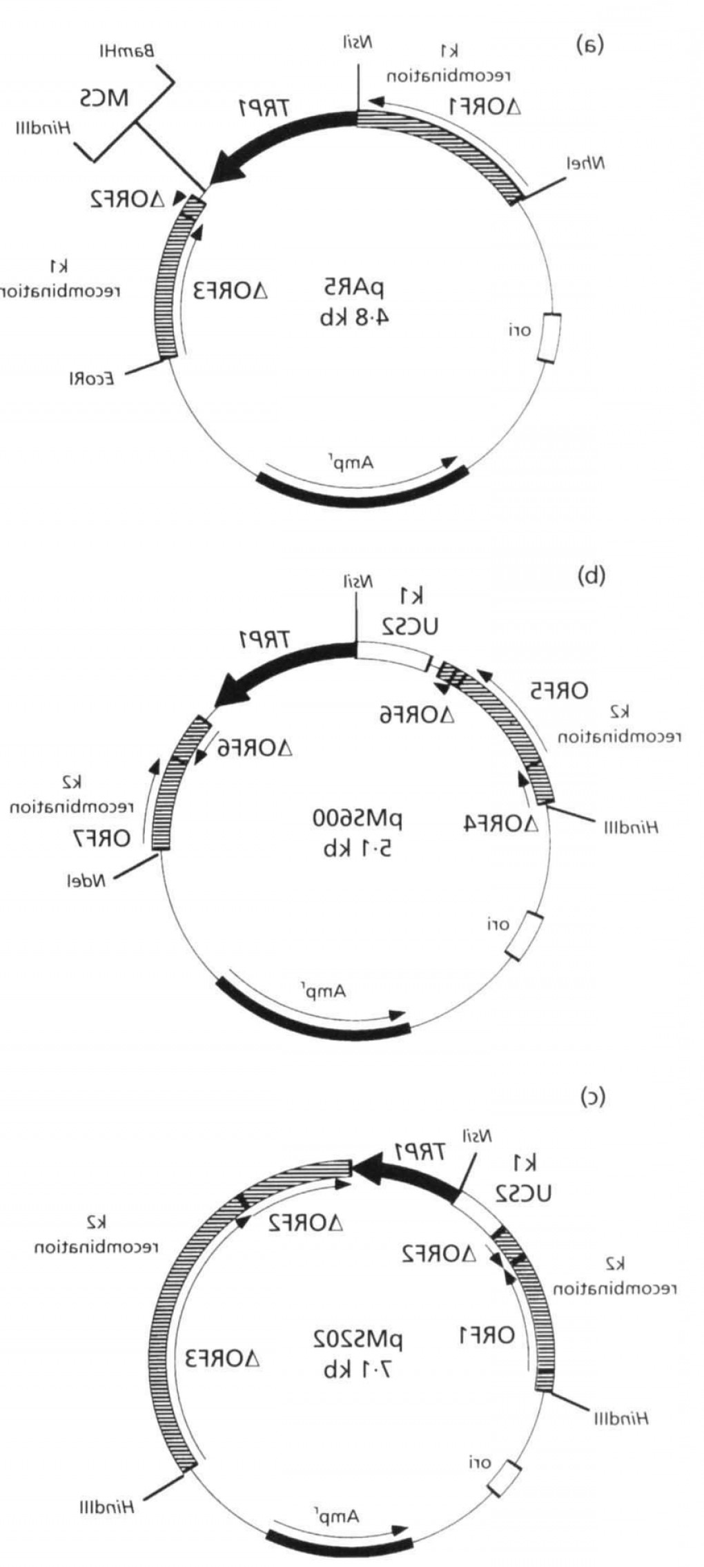 What Are Vectors Used For: Maps Of Plasmid Vectors Par Pm And Pms Used For Genetic Manipulation Of Afig