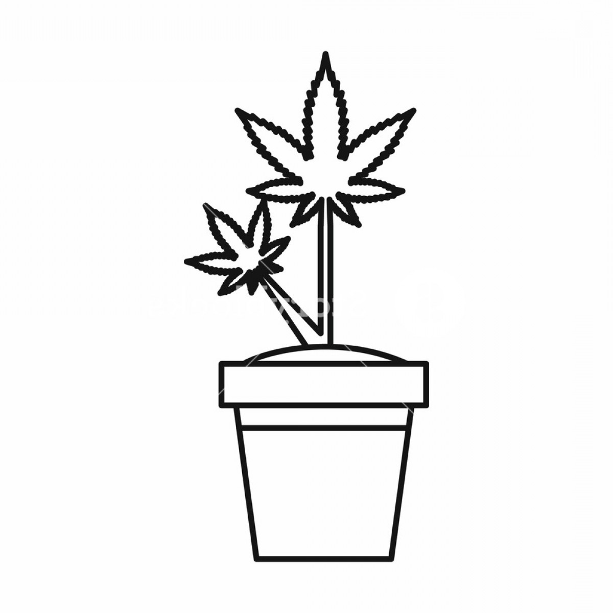 Black And White Vector Image Of Weed Plants: Marijuana Plant In Pot Icon In Outline Style Isolated On White Background Vector Illustration Rexggjhzjfzqgxu