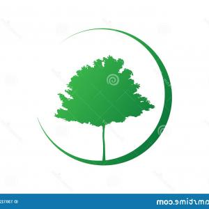 Organic Tree Vector: Maple Tree Vector Silhouette Green Ecology Organic Farm Logo Design Biological Concept Nature Preservation Trust Vector Isolated Image