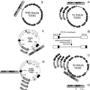 Gateway Entry Vectors: Overview Of Gene Stacking Method Described In This Study A Sequential Events In Modifiedfig