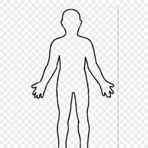 Human Body Outline Vector Art: Mhkkanmnhuman Body Outline Picture Human Body Outline