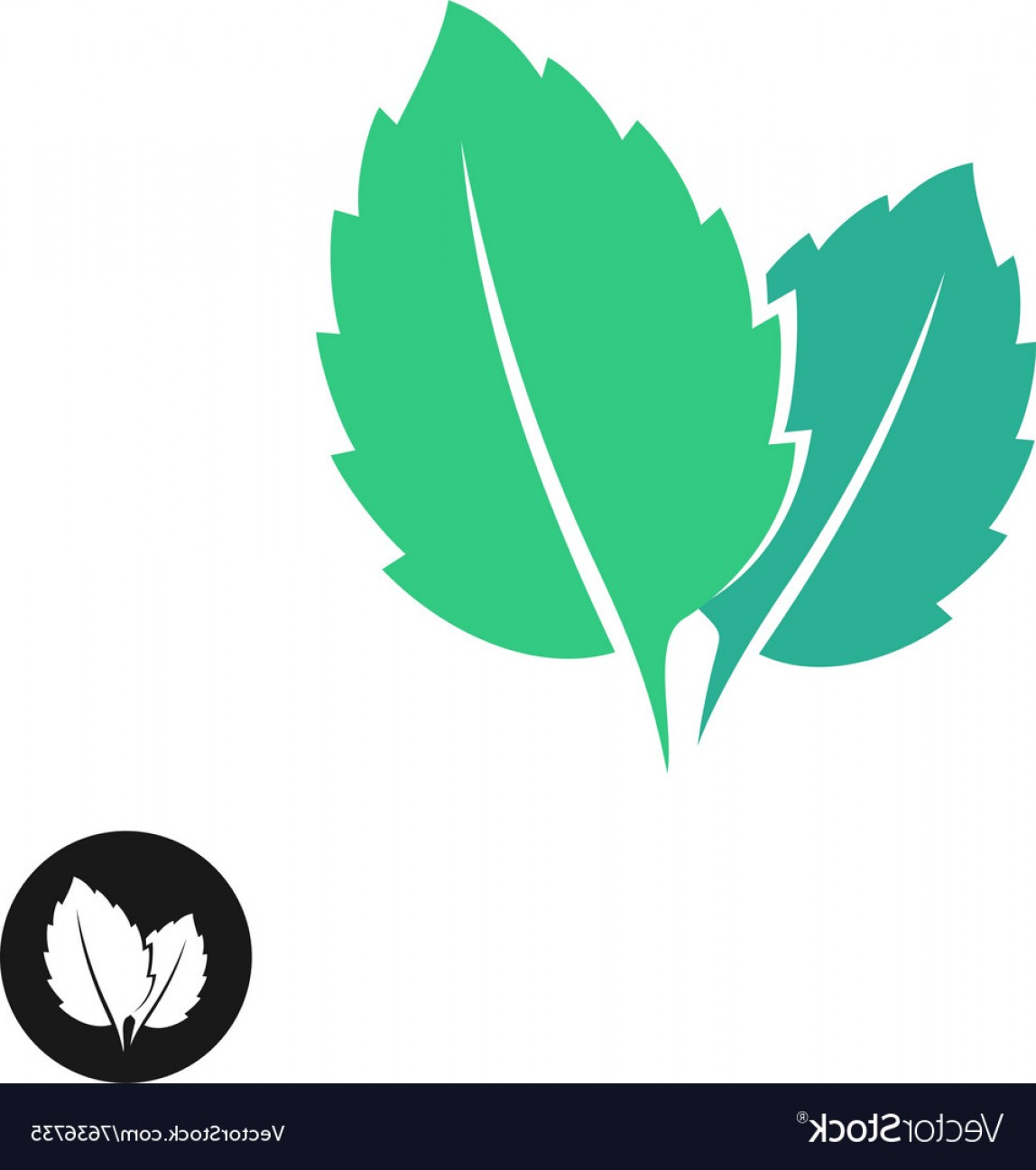 Leaf Vector Logo: Mint Leaves Logo Two Leaves Of A Mint With One Vector