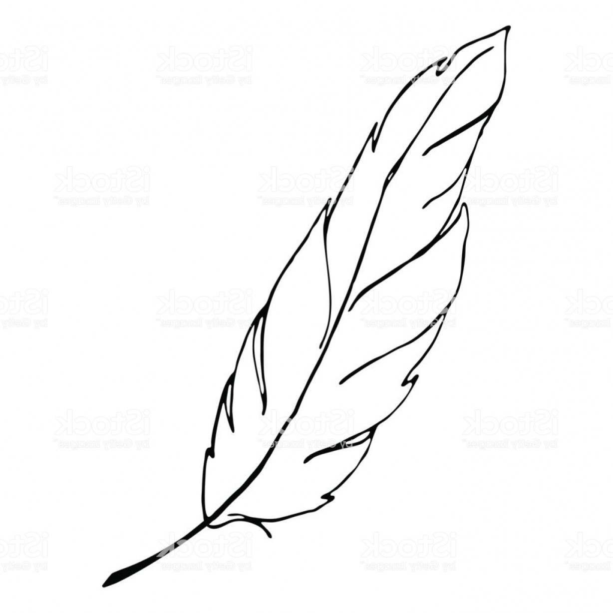Vector Drawing Feathers: Monochrome Black And White Bird Feather Line Art Vector Gm