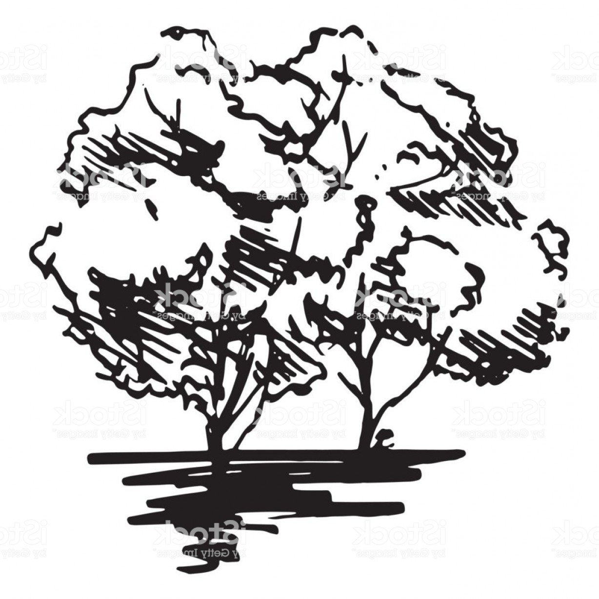 Tree Abstract Line Art And Vector: Monochrome Trees Silhouette Sketched Line Art Isolated Vector Gm