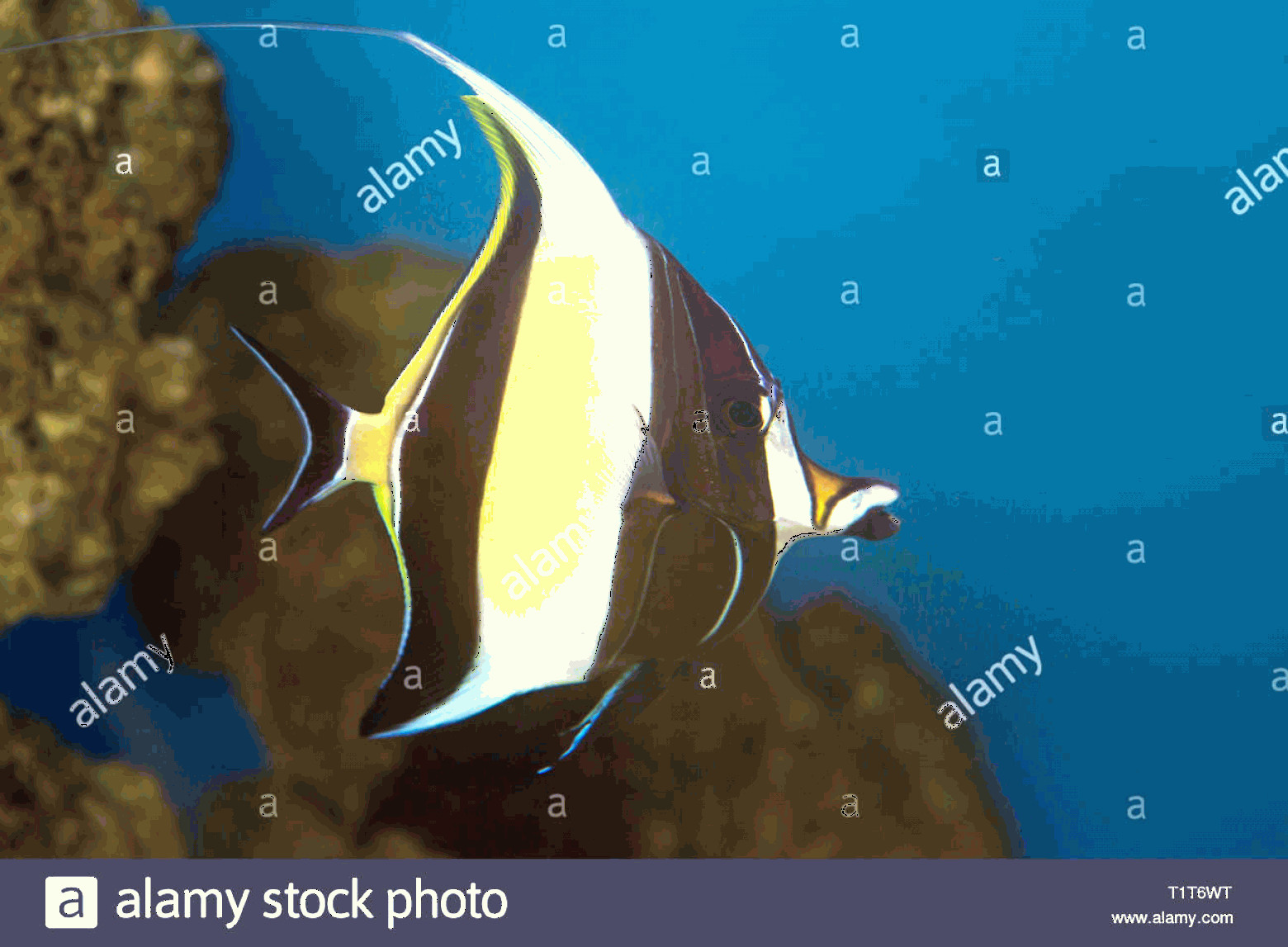 Vector Finding Nemo Fish: Moorish Idol The Type Of Fish Known As Gill In Finding Nemo Image