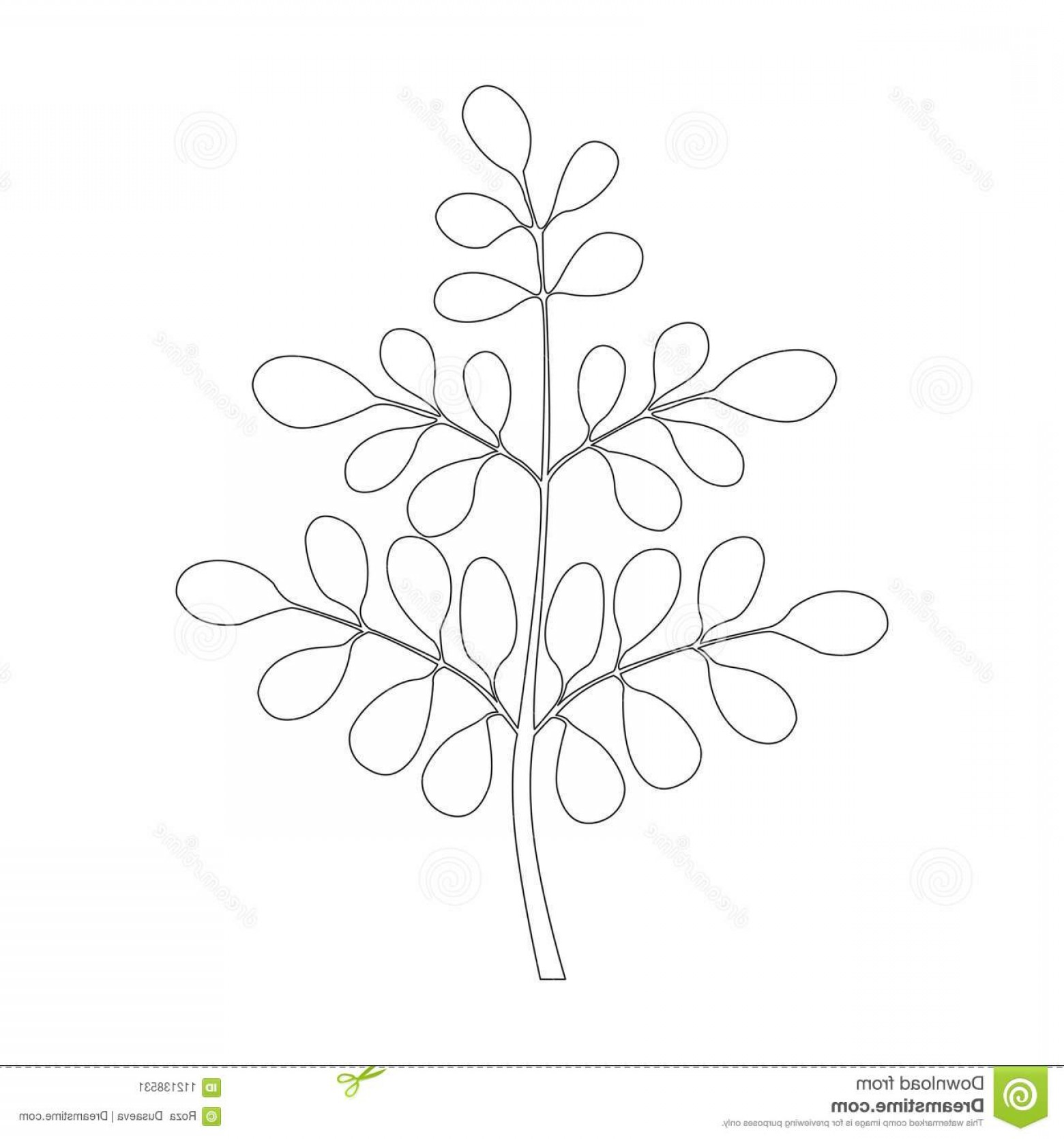 Continuous Tree Branch Vector Image: Moringa Tree Continuous One Line Continuous One Line Drawing Moringa Tree Isolated White Background Vector Illustration Image