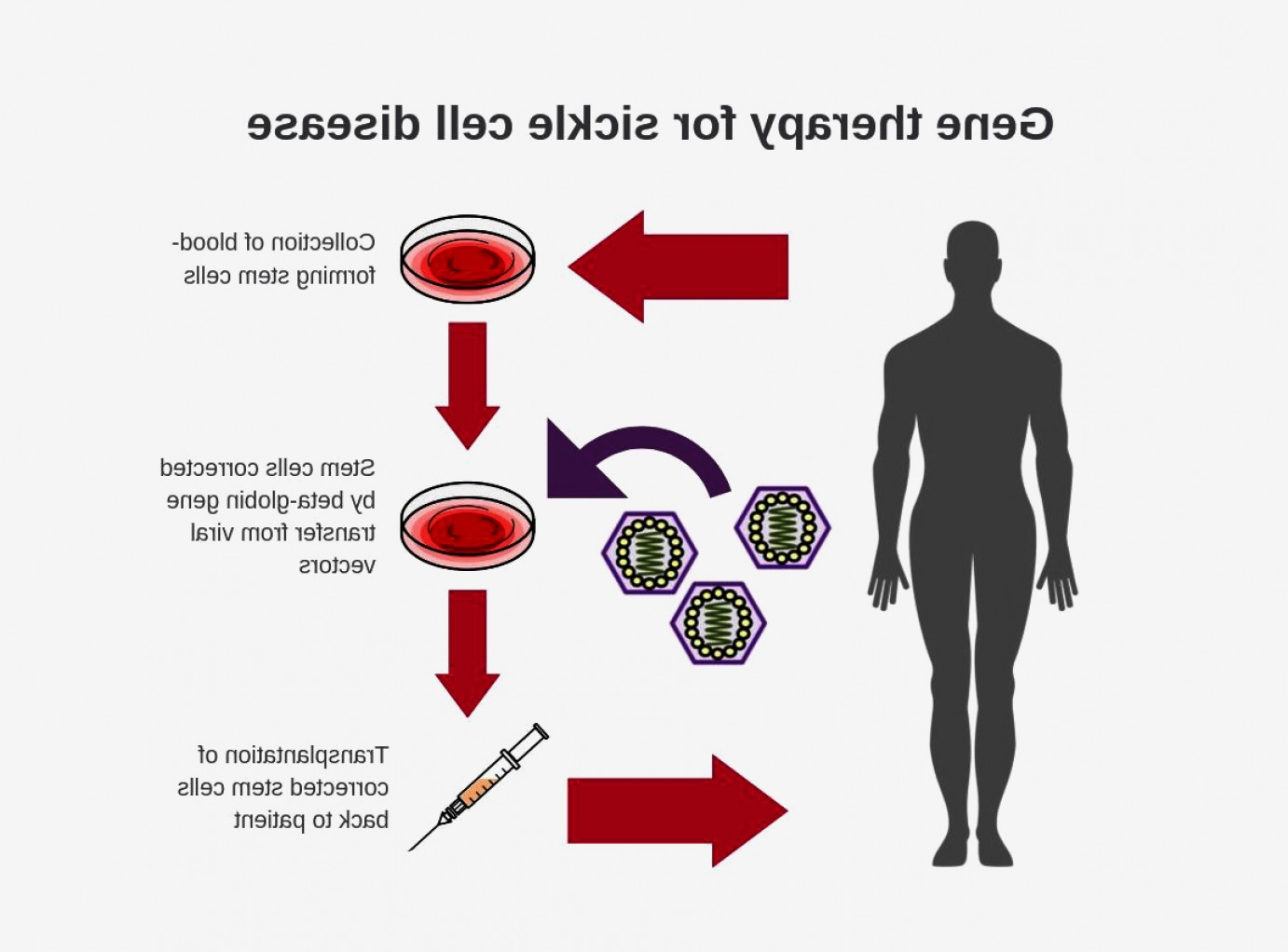Nhgri Logo Vector: Nih Researchers Create New Viral Vector Improved Gene Therapy Sickle Cell Disease