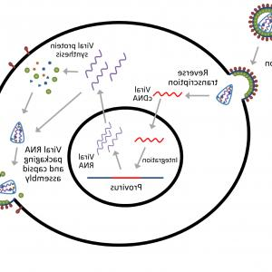 Plko Vector Cloning: Nucleic Acid Delivery Lentiviral And Retroviral Vectors