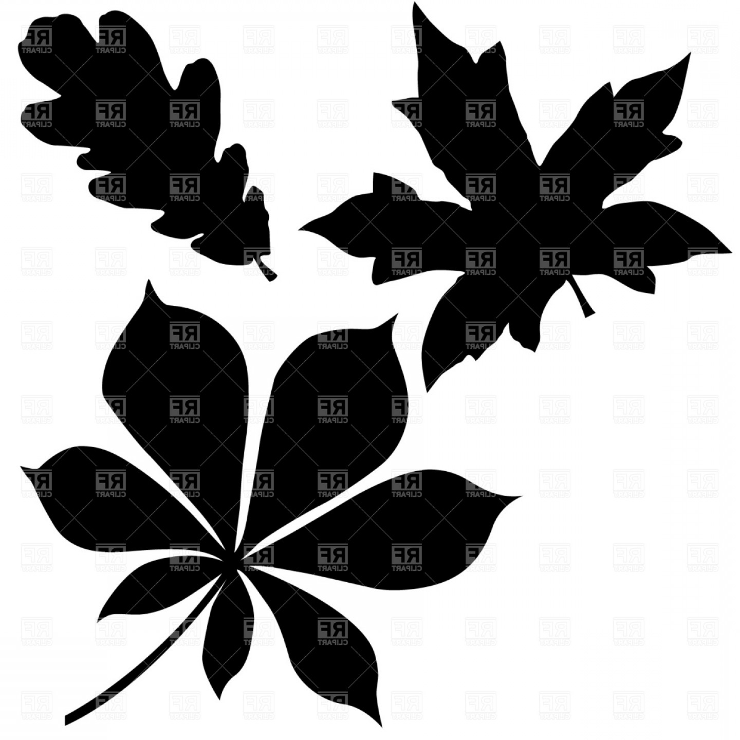 Oak Leaf Vector Clip Art: Oak Chestnut And Maple Leaf Vector Clipart