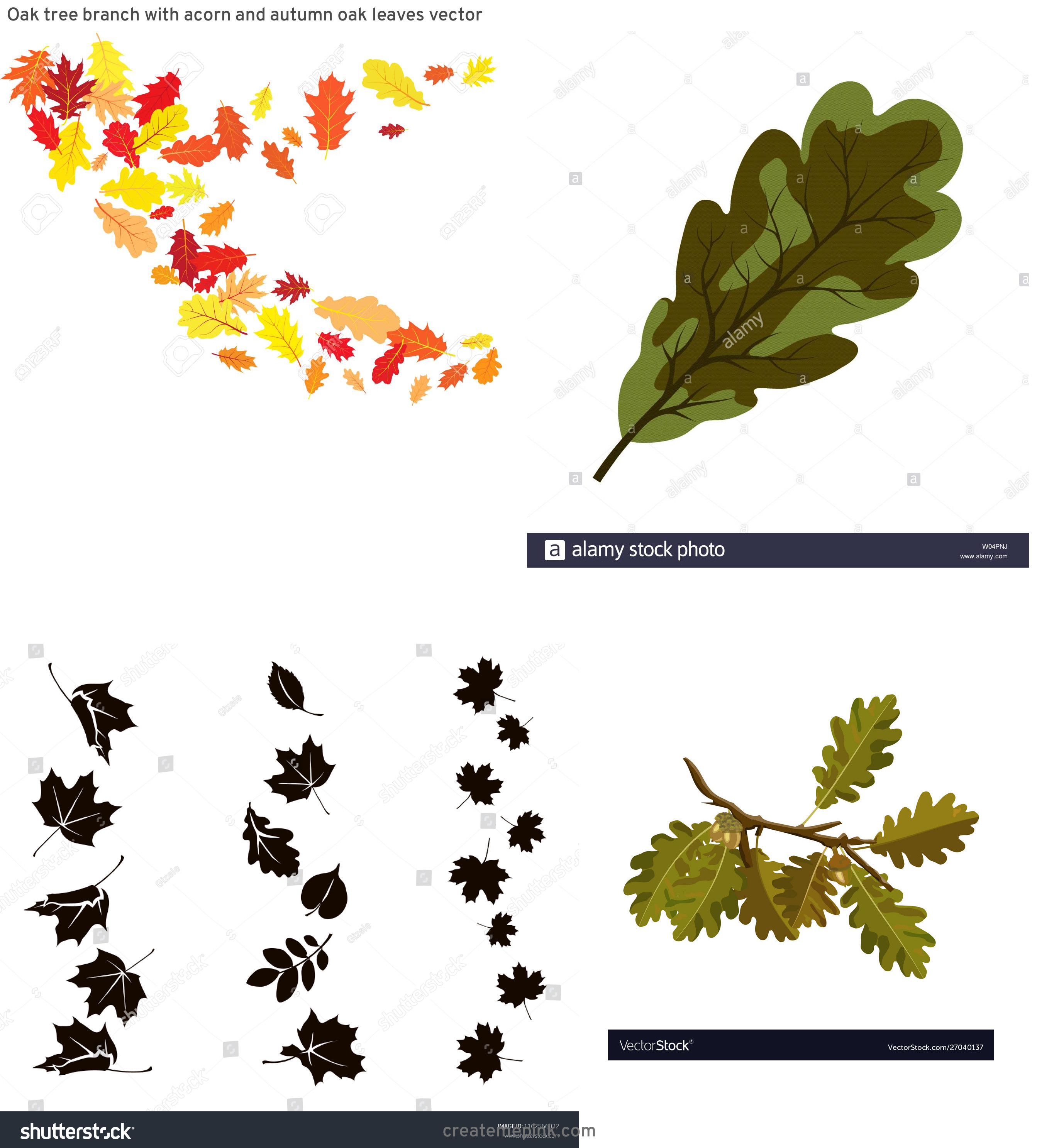 Falling Oak Leaves Vector: Oak Tree Branch With Acorn And Autumn Oak Leaves Vector