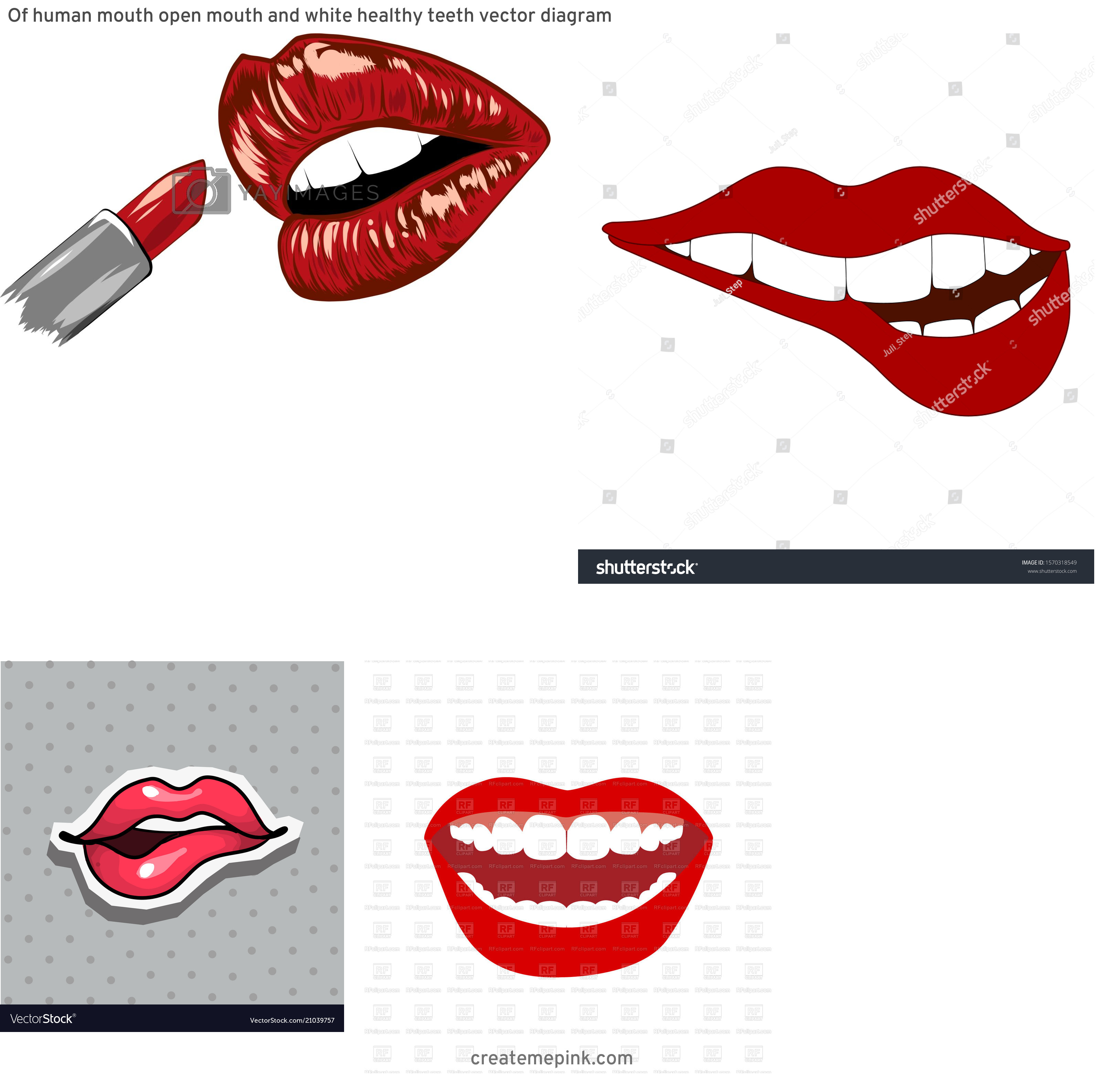 Biting Lip Vector: Of Human Mouth Open Mouth And White Healthy Teeth Vector Diagram