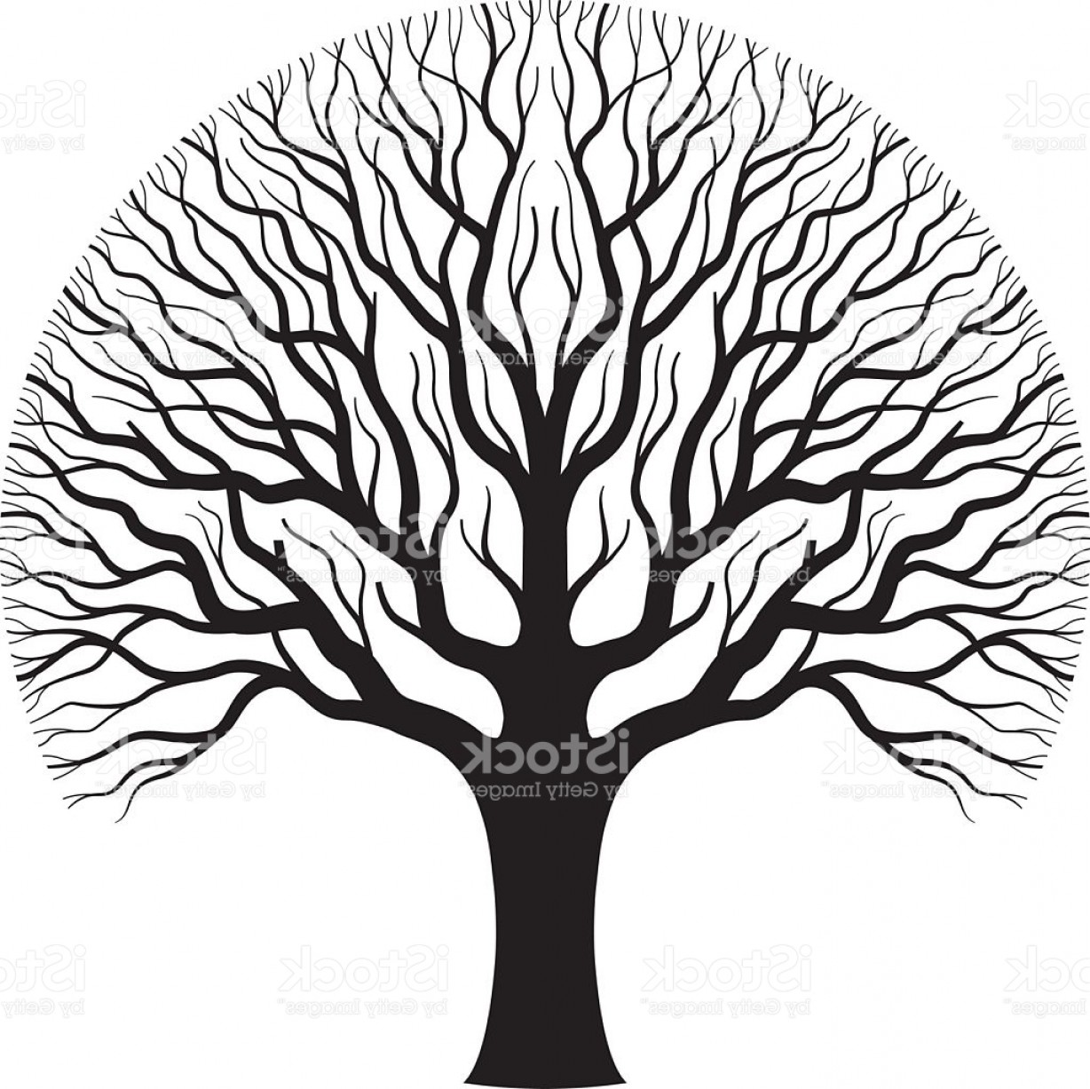 Oak Tree Silhouette Vector Graphics: Old Oak Tree Illustration Gm