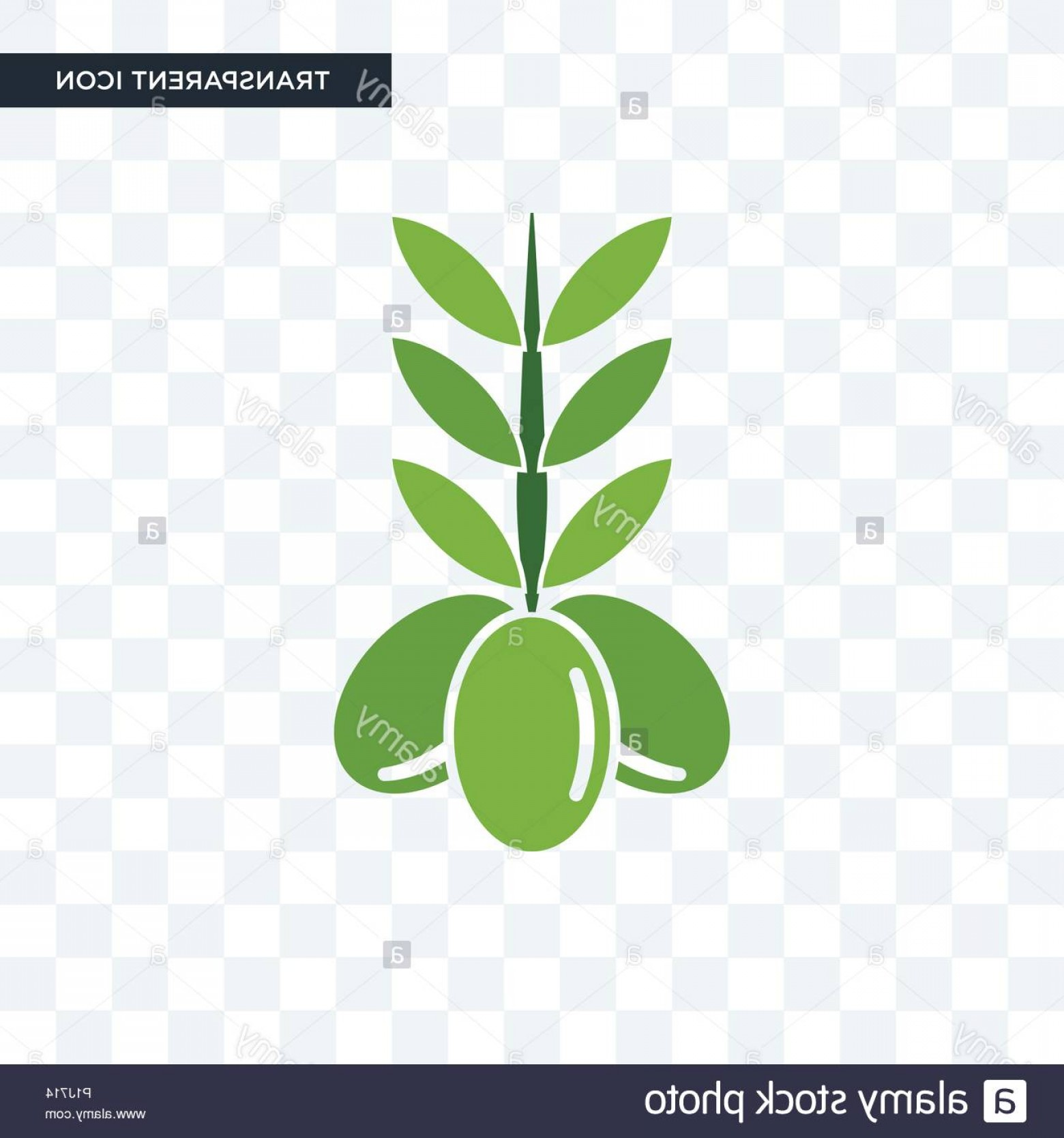Olive Vector: Olive Vector Icon Isolated On Transparent Background Olive Logo Concept Image