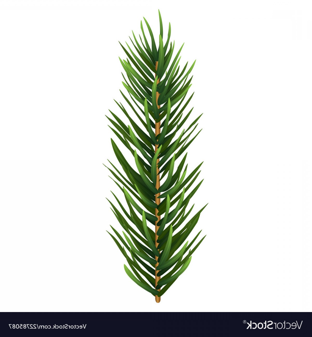 Pine Leaves Vector: One Single Realistic Spruce Or Pine Branch Leaf Vector