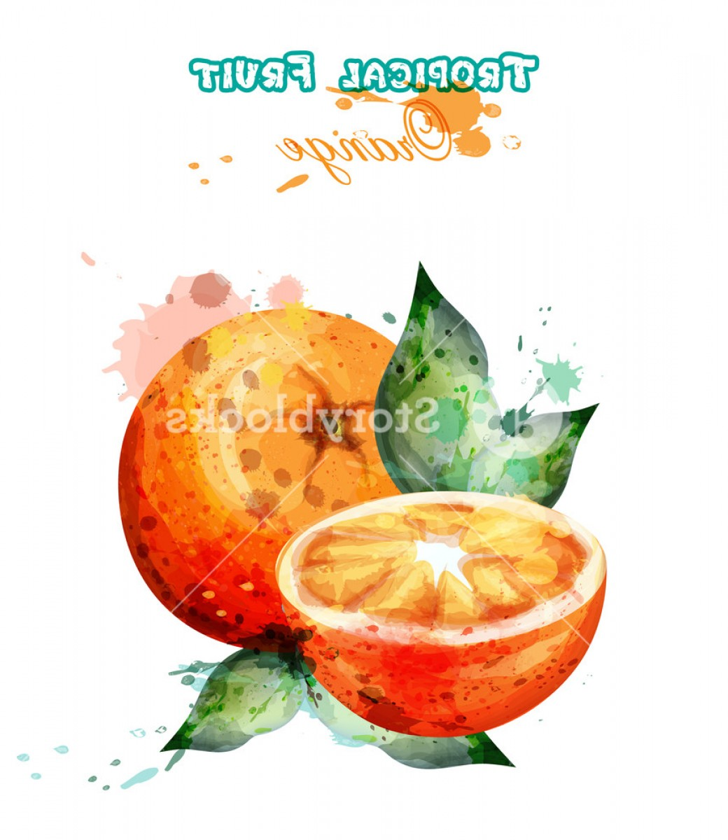 Orange Watercolor Vector Free: Orange Fruit Watercolor Vector Juicy Colorful Template Illustration Hvxlyxnlmjlauxxe