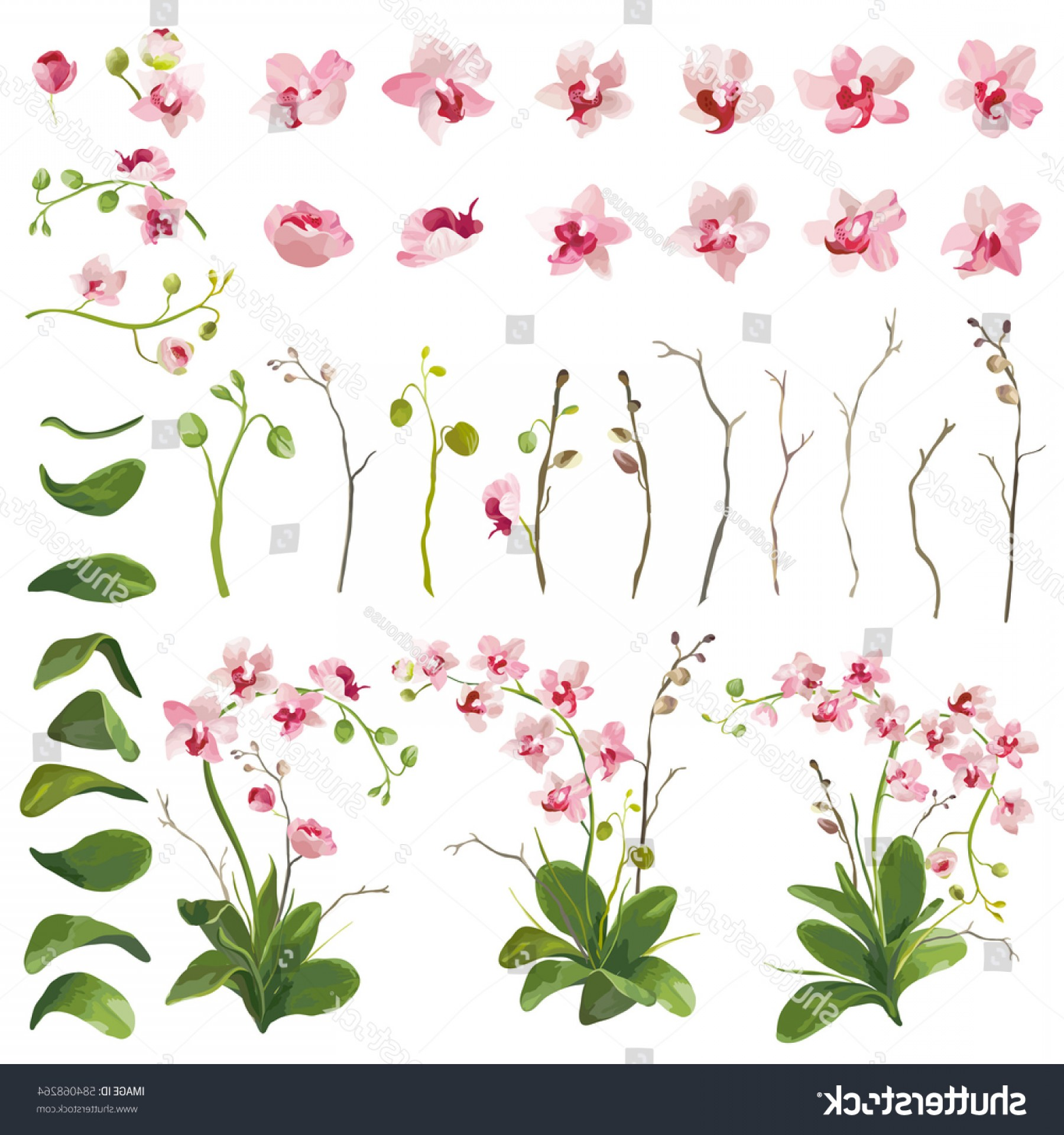 Flower Elements Vector: Orchid Tropical Flowers Floral Elements Watercolor