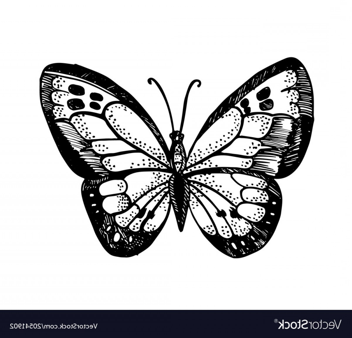 Butter Fly And Flower Vector Black And White: Ornamented Abstract Butterfly And Flower Vector