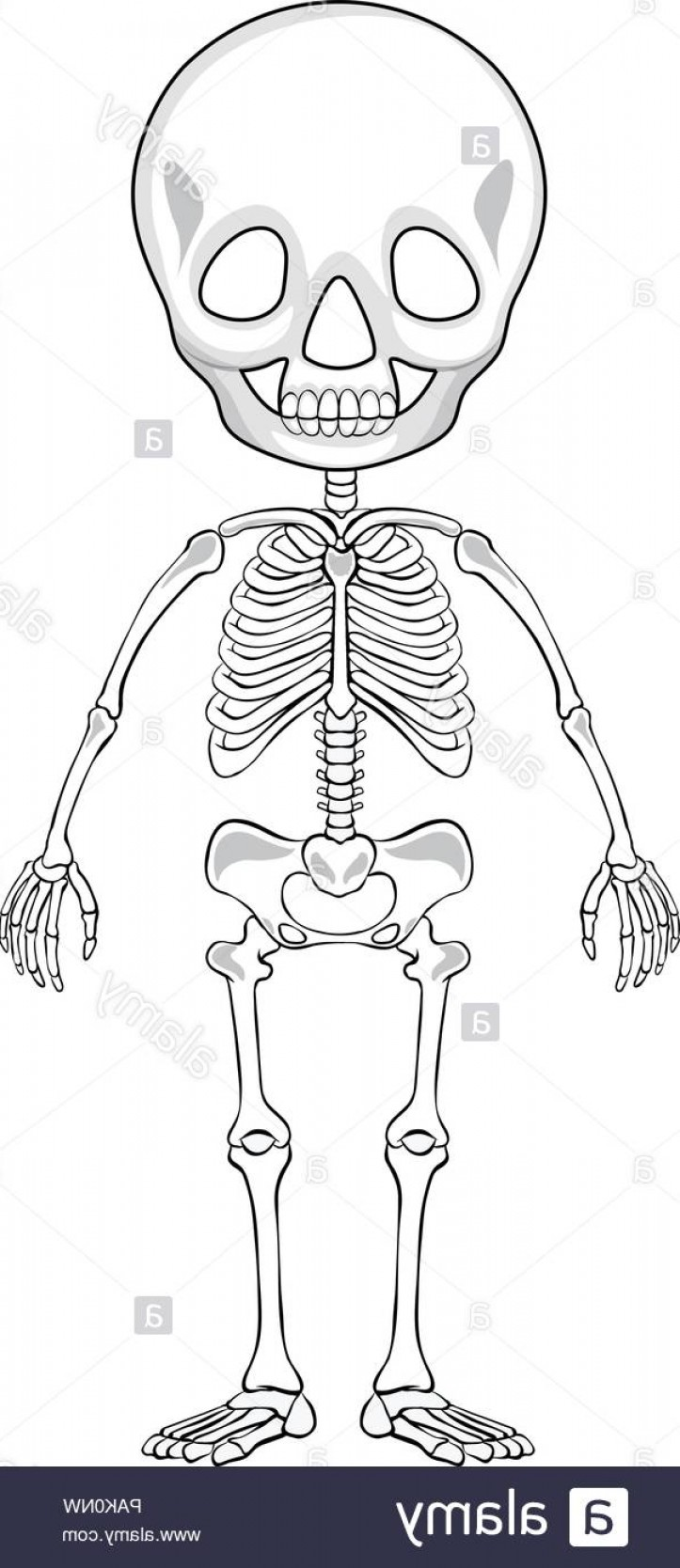 Line Art Human Body Skeleton Labeled Bones Of The Vector: Outline Drawing Of A Human Skeleton Illustration Image