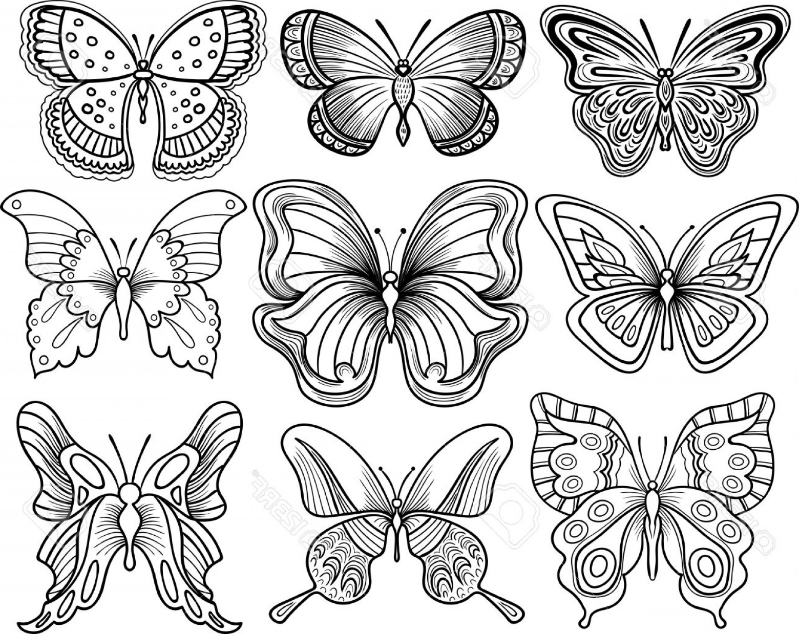 Butterly Vector: Outline Drawing Of Butterfly Hand Drawing Butterfly Vector Clipart Black Outline Royalty Free