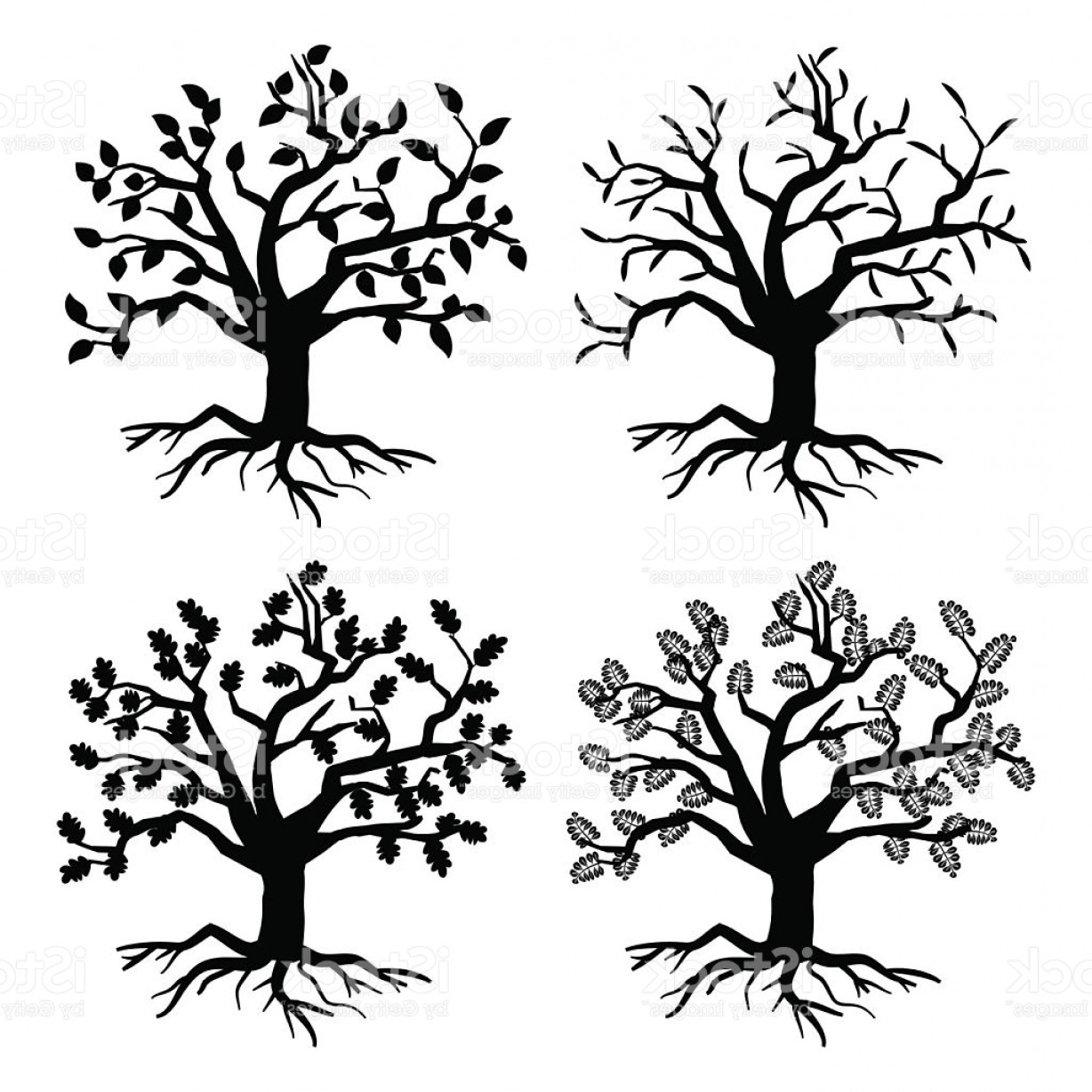 Oak Tree Silhouette Vector Graphics: Park Old Trees Vector Tree Silhouettes With Roots And Leaves Gm