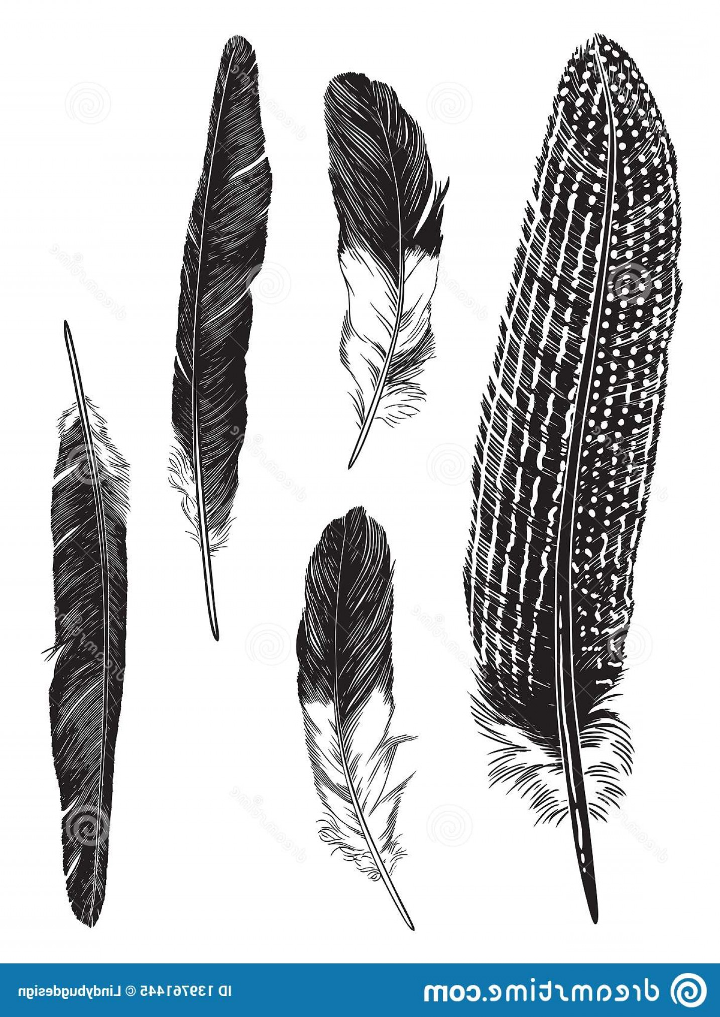 Vector Drawing Feathers: Pen Ink Illustration Five Feathers Detailed Vector Drawing Print Image