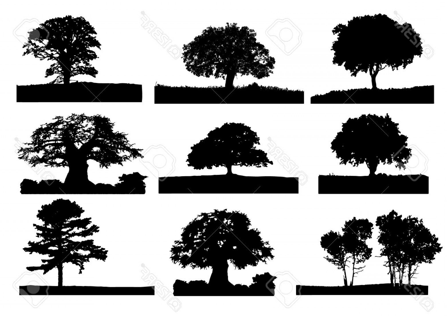 Oak Tree Silhouette Vector Graphics: Photo Black Tree Silhouette With Grass