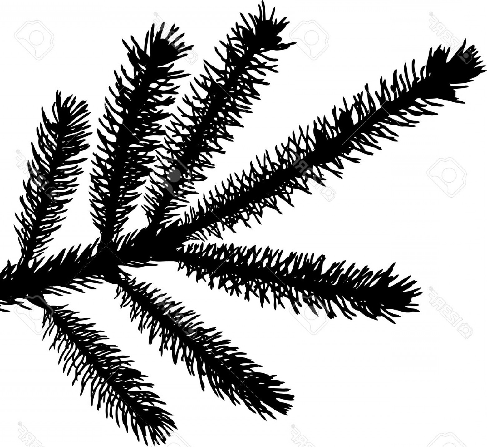 Pine Leaf Vector: Photoa Detailed Vector Backgroung Of Christmas Pine Needles