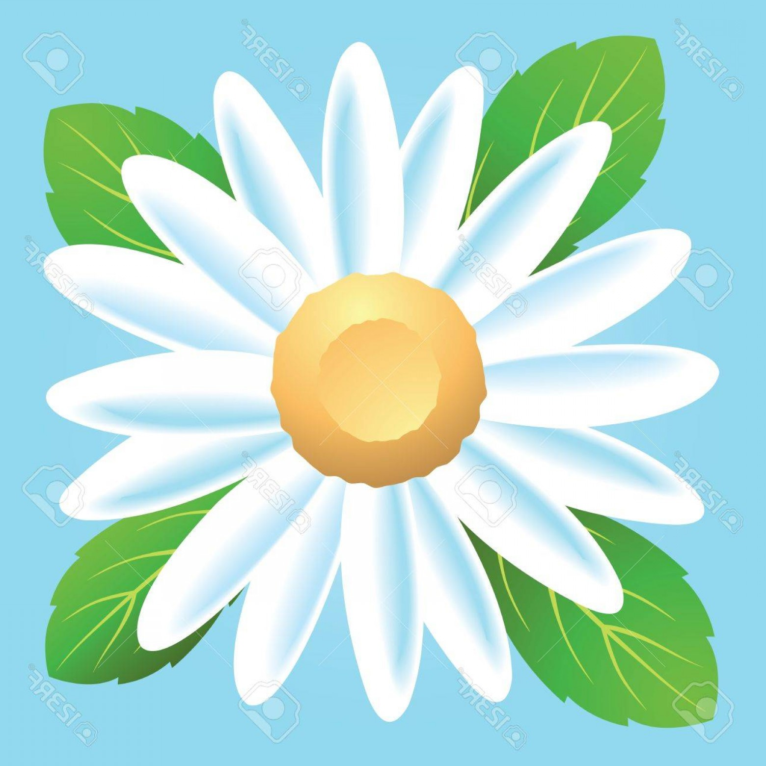 Simple Vector Daisy: Photoa Simple Daisy Flower Icon