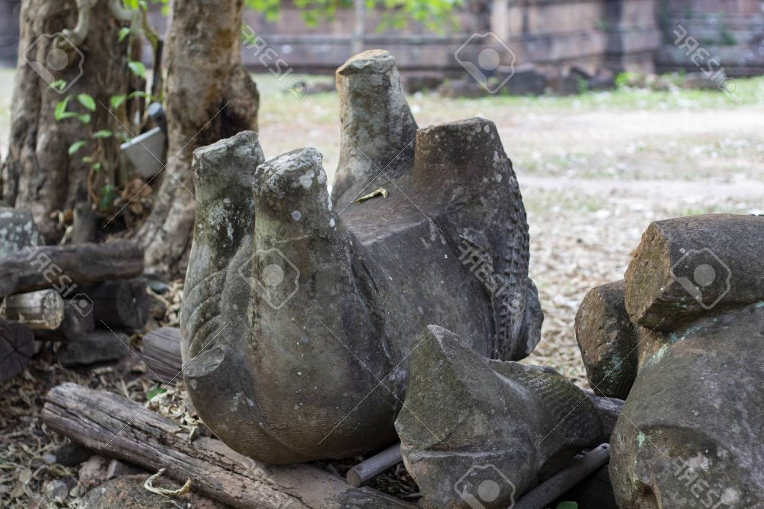 Ancient Jungle Statue Vector Images: Photoancient Stone Ruin In Angkor Wat Temple Animal Stone Statue Ruin On Ground Khmer Heritage Temple Rui
