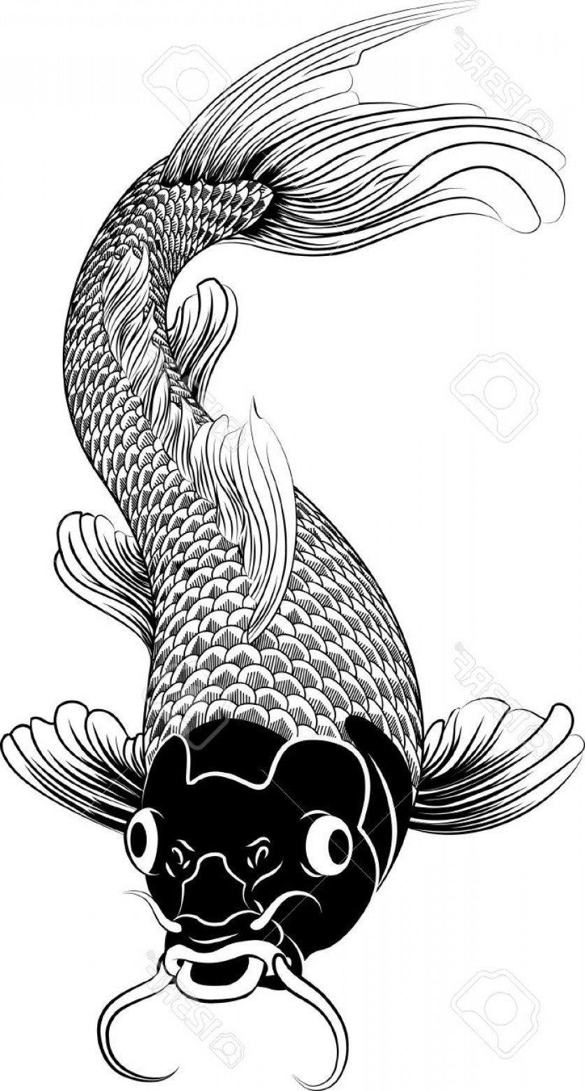 Black And White Koi Vector: Photobeautiful Black And White Vector Illustration Of A Japanese Or Chinese Inspired Koi Carp Fish
