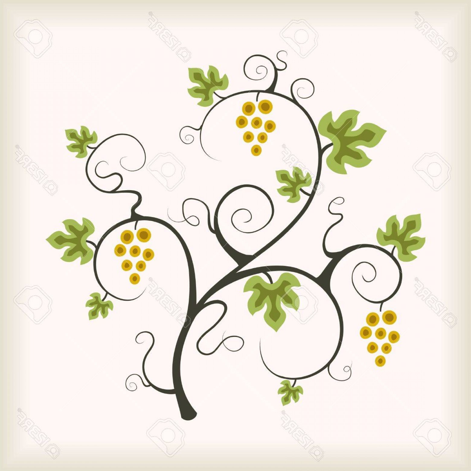 Vector Vine Tree: Photobeautiful Grape Vine Tree Vector Illustration