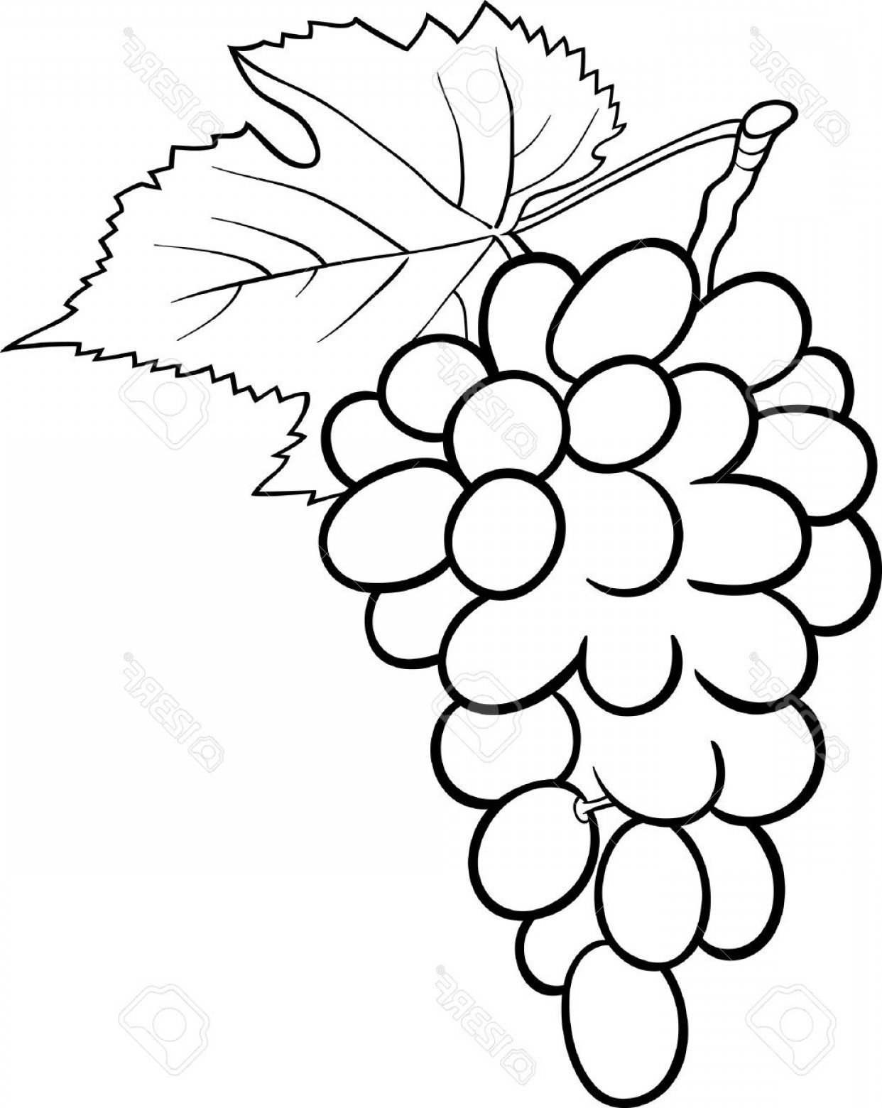Grapes Clip Art Vector: Photoblack And White Cartoon Illustration Of Bunch Of Grapes Or Grapevine Fruit Food Object For Coloring