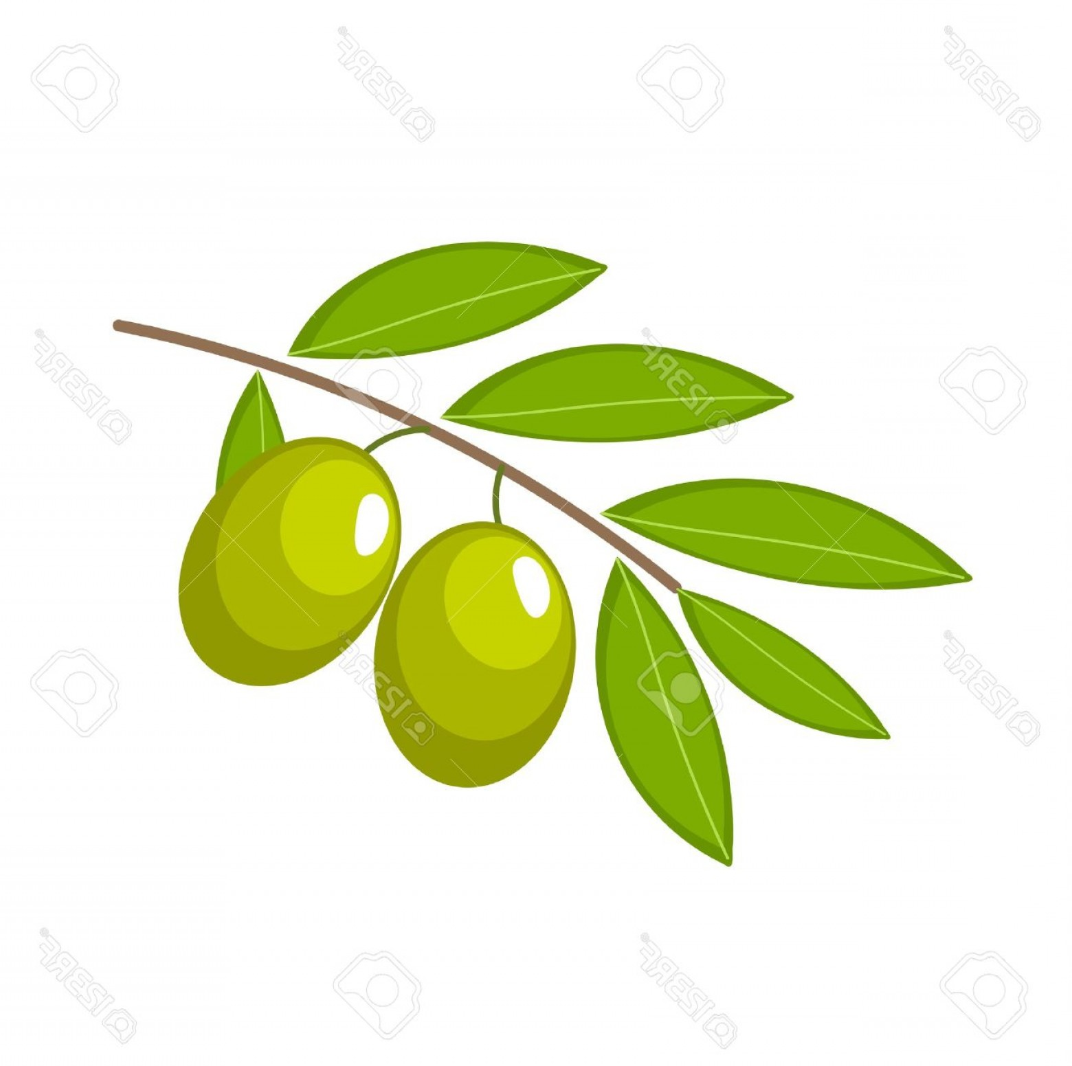 Olive Vector: Photobranch With Green Olives Vector Illustration